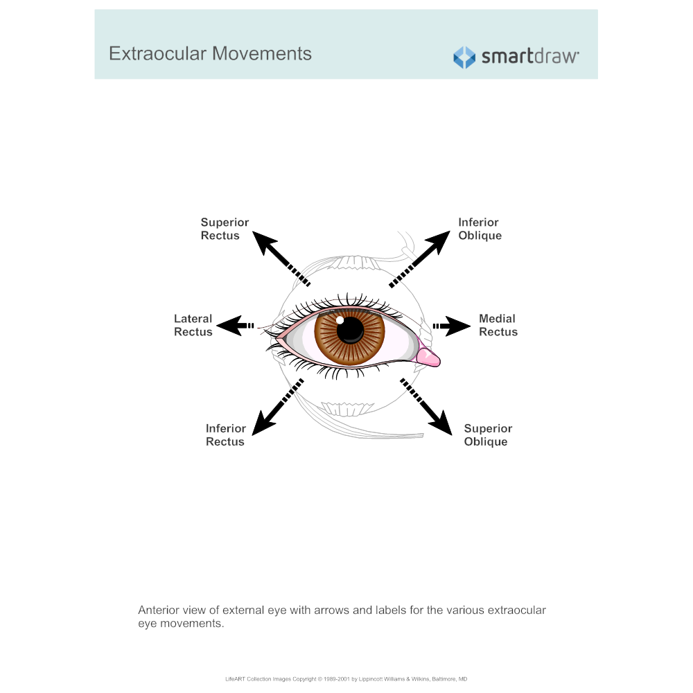 Example Image: Extraocular Movements