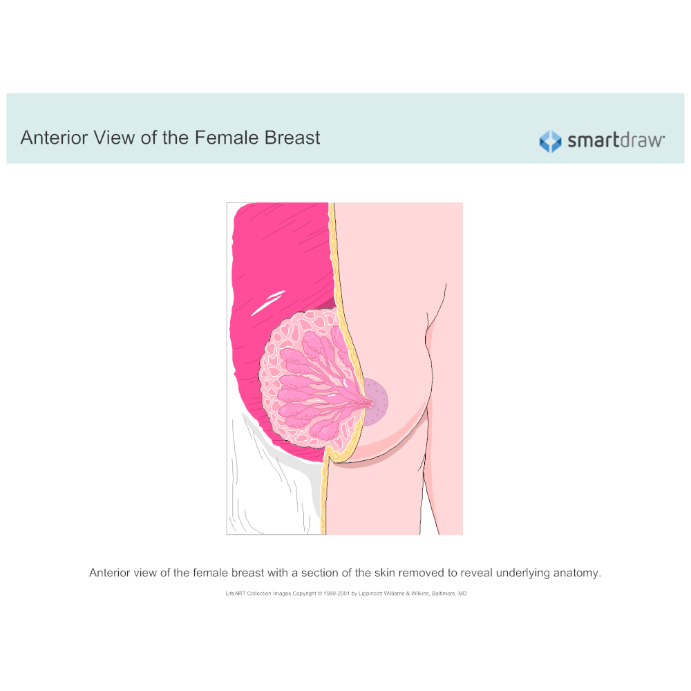 Example Image: Anterior View of the Female Breast