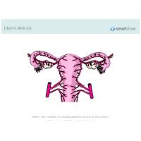 Uterine Arteries