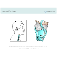Laryngeal Cartilages