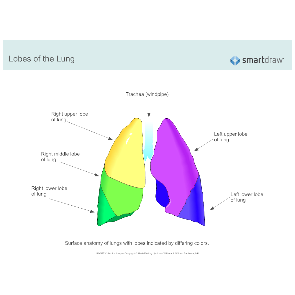 Example Image: Lobes of the Lung