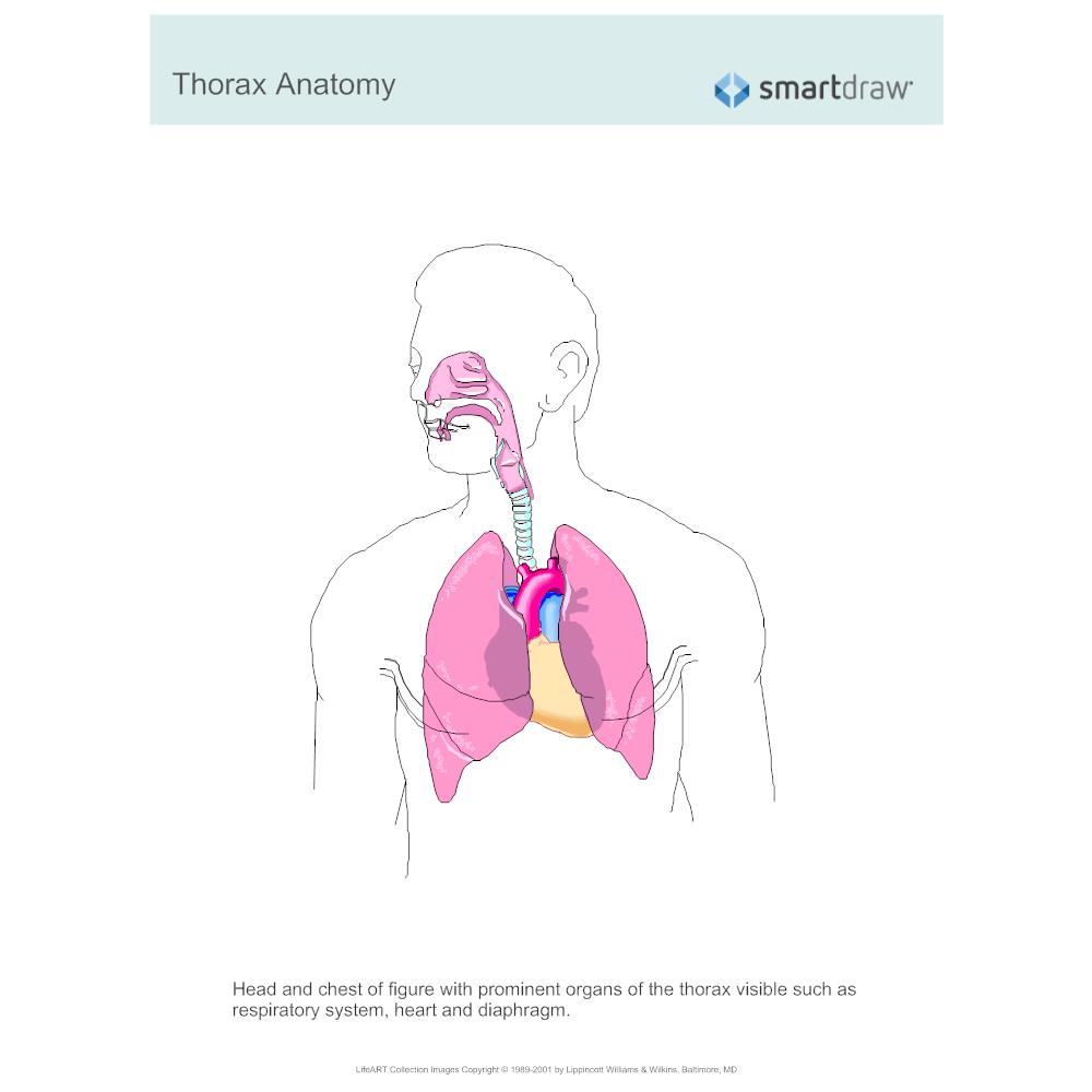 Example Image: Thorax Anatomy