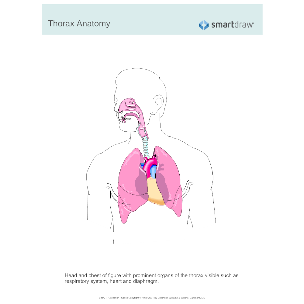 Example Image: Thorax Anatomy