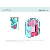 Tracheal Rings