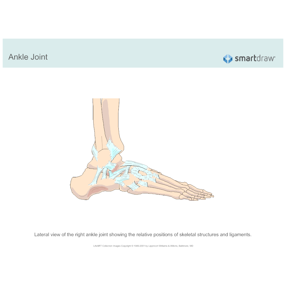 Example Image: Ankle Joint