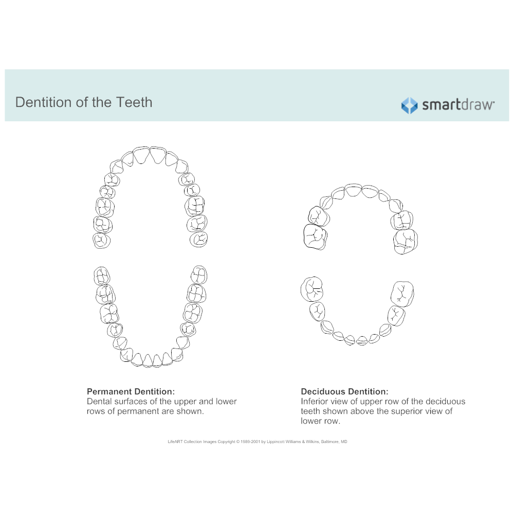 Example Image: Dentition of the Teeth