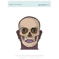 Facial Landmarks