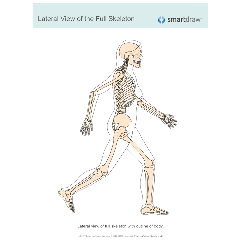 Example Image: View of the Full Skeleton - Lateral