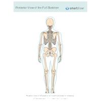 View of the Full Skeleton - Posterior