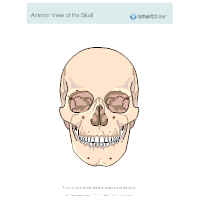 View of the Skull - Anterior