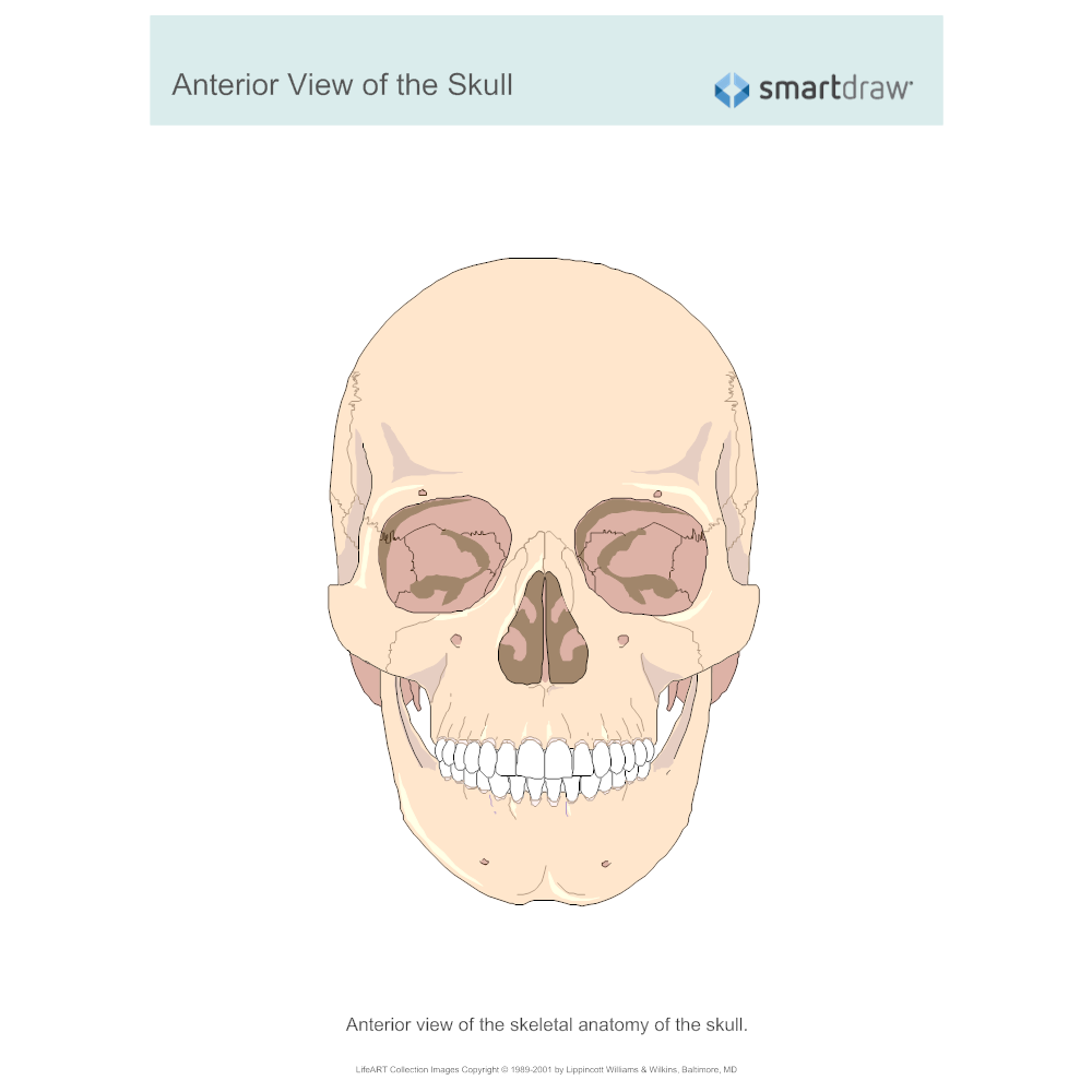 Example Image: View of the Skull - Anterior
