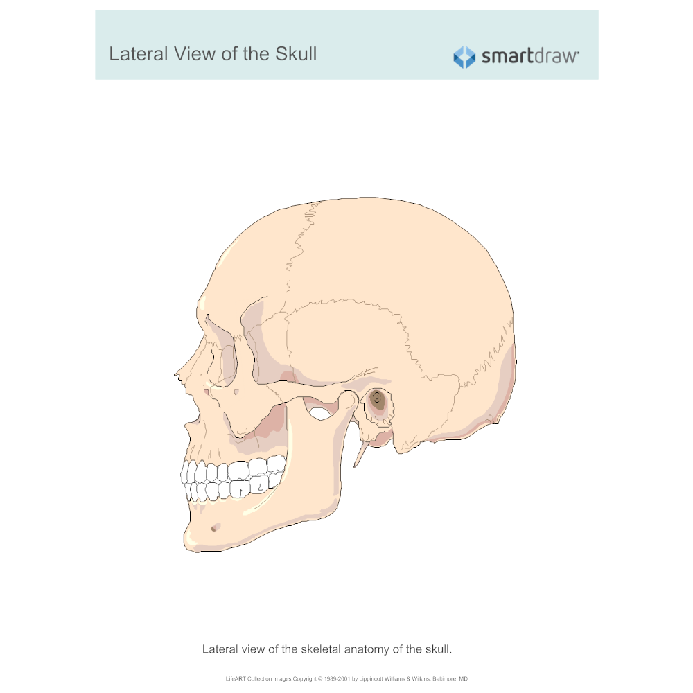 Example Image: View of the Skull - Lateral