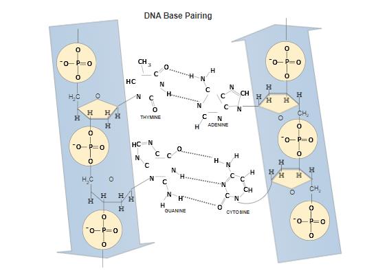 Scientific Diagram Maker - Free Online App & Download for