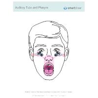 Auditory Tube and Pharynx