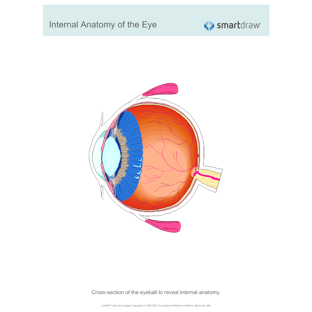 Example Image: Internal Anatomy of the Eye