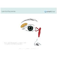 Lacrimal Apparatus - 2