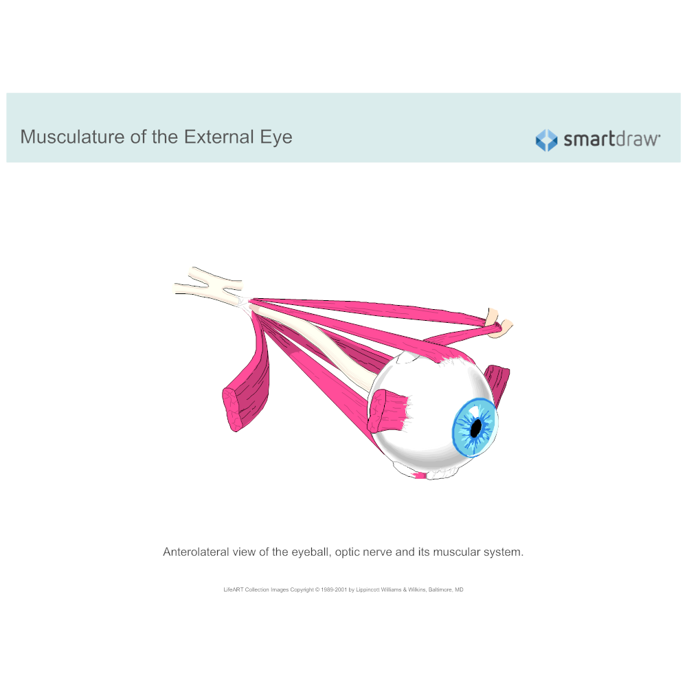 Example Image: Musculature of the Eye - 2