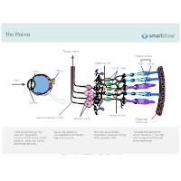 Retina - 2