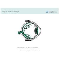 Sagittal View of the Eye