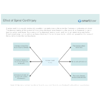 Effect of Spinal Cord Injury